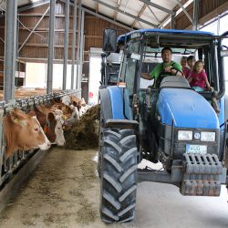 Traktor bringt Futter