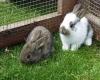 Zwei kleine Hasen im Freigehege