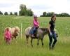 Katja führt die Ponys am Halfter